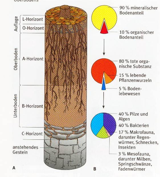 Waldboden for Boden zusammensetzung